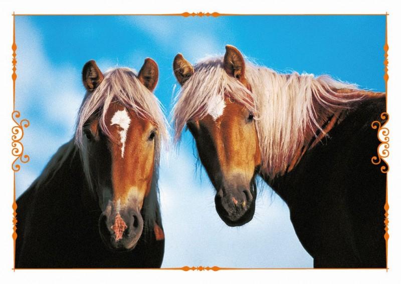 Pferde Stickerkollektion - eine Reise durch die Welt der Farben