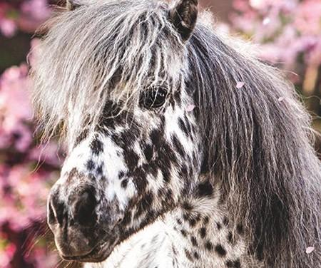 Pferde – Reise durch die Welt der Farben Sticker